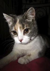 PhoebeBaby