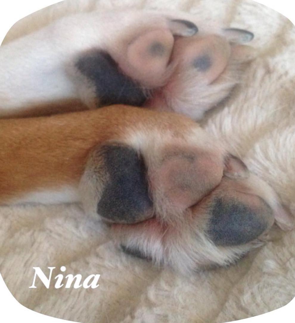 Nina needs your help